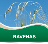 RAVENAS - Cheminova